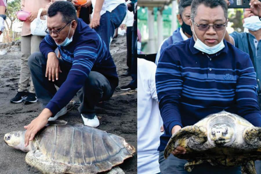 Konservasi Penyu di Pantai Mapak Kota Mataram Sebagai Wahana Wisata Edukasi